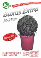 Buxus Extra 20-25cm  kom
