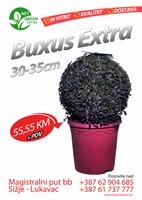 Buxus Extra 30-35cm  kom