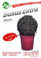Boxus Extra 30cm  kom
