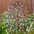 Salix caprea klimanrock o23-140 cm kom